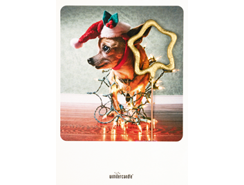 Xmas dog 372 Mini Wondercard®